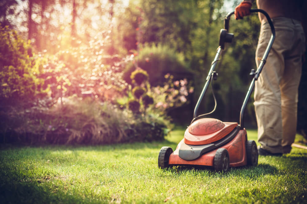 Who Is Responsible For Maintaining The Garden In A Rented Property