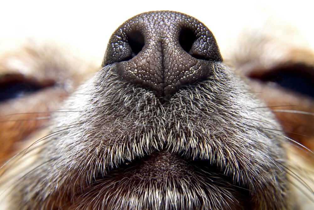 "Is pet odour making rental properties ""Eau de No Let'?"