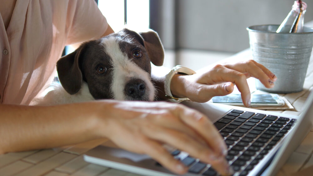 Will 'working from home' leave landlords with a bigger maintenance bill long term?