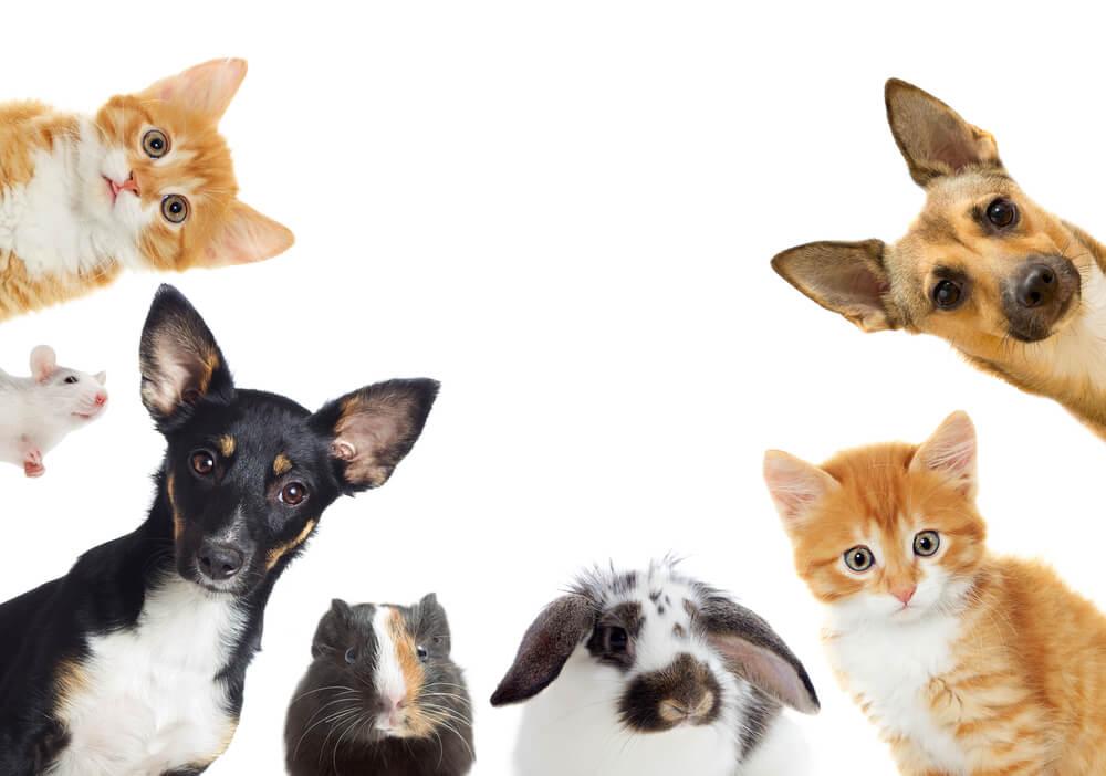 """Is pet odour making an """"Eau de No Let' out of rental properties?"""
